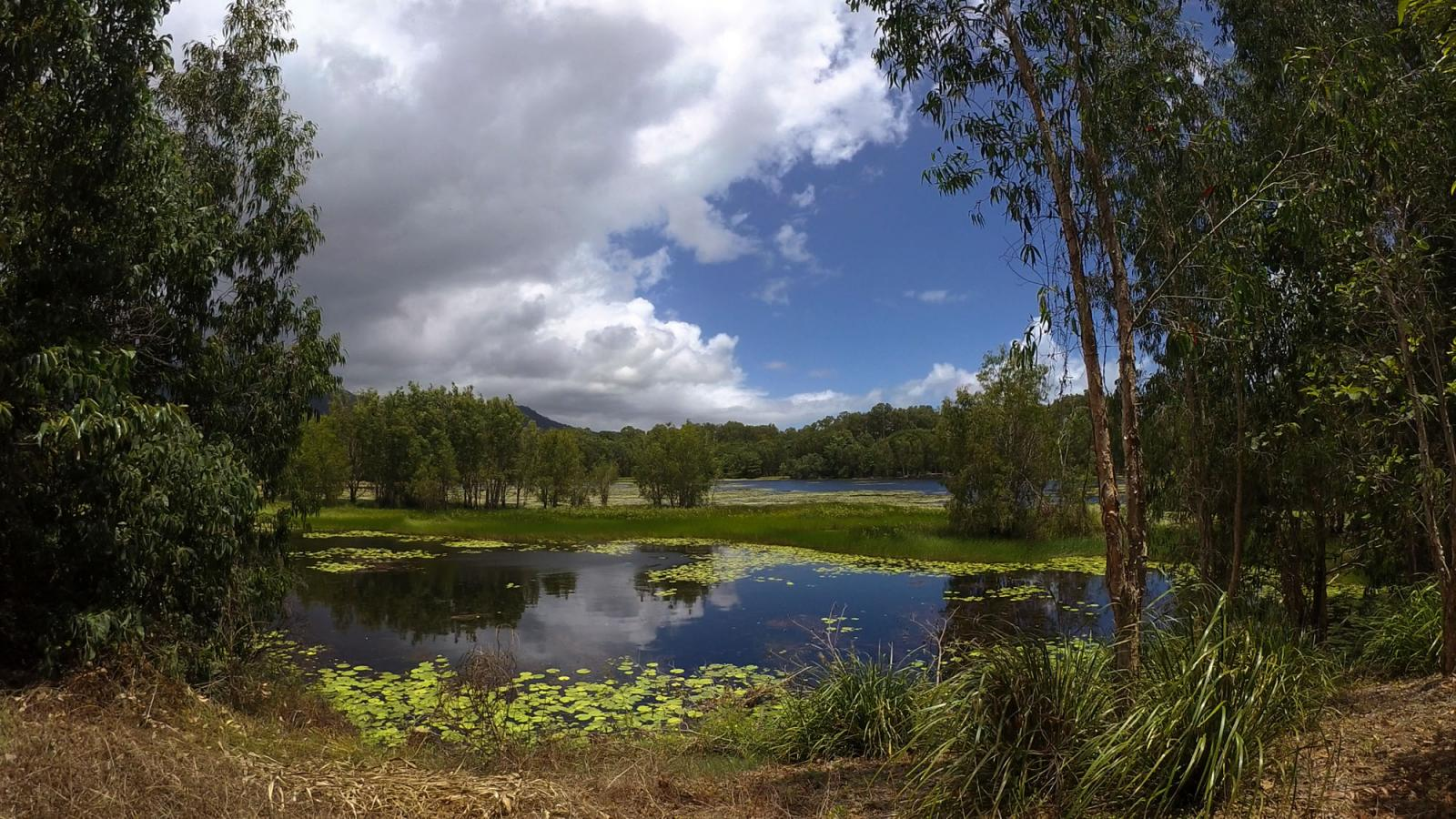 Birdwatching at the Cattana Wetlands, Smithfield, Queensland